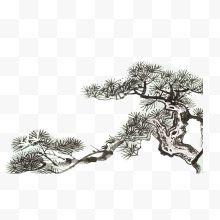 美人树是指什么树_树木的种类和特点_树的特点